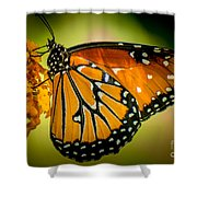 Butterfly 29 Shower Curtain