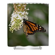 Butterfly #6 Shower Curtain