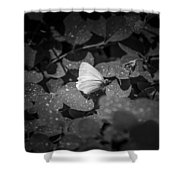 Butterfly 8 Shower Curtain