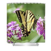 Butterfly #9 Shower Curtain