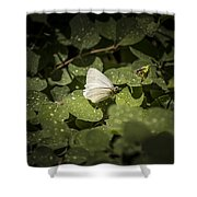 Butterfly 9 Shower Curtain