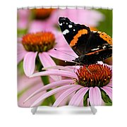 Butterfly And Cone Flowers Shower Curtain