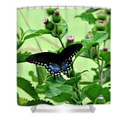 Butterfly And Mossy Pond Shower Curtain
