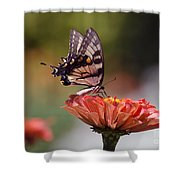 Butterfly And Orange Zinnia Shower Curtain