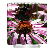Butterfly And Pink Cone Flower Shower Curtain
