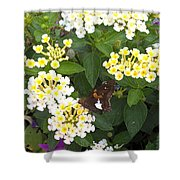 Butterfly And The Spider Shower Curtain