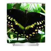 Butterfly Art 3 Shower Curtain