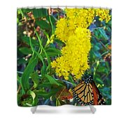 Butterfly At Cape May Nj Shower Curtain