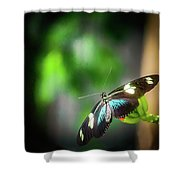 Butterfly At Cleveland Botanical Gardens Shower Curtain
