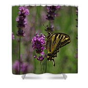 Butterfly Balancing Act Shower Curtain