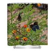 Butterfly Ballet Shower Curtain