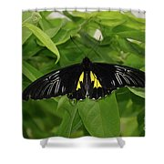 Butterfly Black And Yellow Shower Curtain