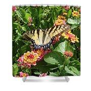 Butterfly Blend Shower Curtain