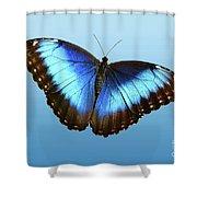 Blue Morpho Beauty Shower Curtain