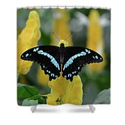 Butterfly Blue Striped Shower Curtain