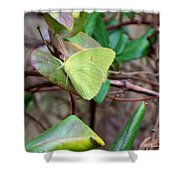 Butterfly Camouflage Shower Curtain