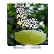 Butterfly Cocktail Time Shower Curtain