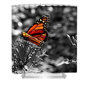 Butterfly Color On Black And White Shower Curtain