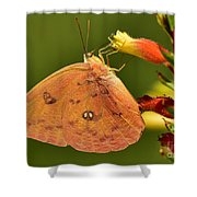 Butterfly Delight Shower Curtain