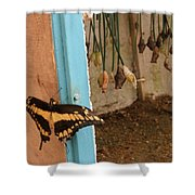 Butterfly Drying His New Wings Shower Curtain
