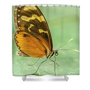 Butterfly Eueides Isabella Shower Curtain
