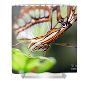 Butterfly Face Shower Curtain