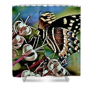 Butterfly Fantasy Shower Curtain