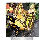 Butterfly Feast  Shower Curtain
