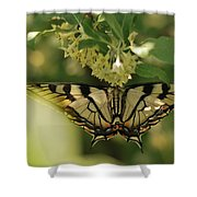 Butterfly From Another Side Shower Curtain