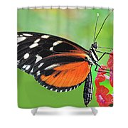 Butterfly  Golden Helicon Shower Curtain