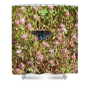 Butterfly In Clover Shower Curtain