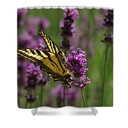 Butterfly In Lavender Shower Curtain