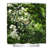 Butterfly In Muted Green Background Shower Curtain
