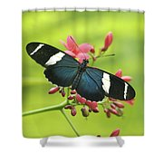 butterfly in Square Shower Curtain