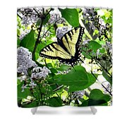 Butterfly In The Lilac No. 1 Shower Curtain
