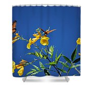 Butterfly In The Sonoran Desert Musuem Shower Curtain