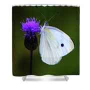 Butterfly In White Shower Curtain