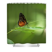 Golden Helicon Butterfly Shower Curtain