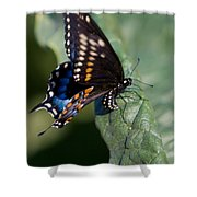 Butterfly Laying Eggs Shower Curtain