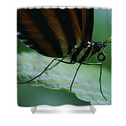 Butterfly Leaf Shower Curtain