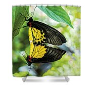 Butterfly Mating Shower Curtain