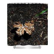 Butterfly Mushroom Shower Curtain
