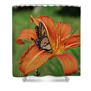 Butterfly On A Blooming Orange Daylily Flower Blossom Shower Curtain