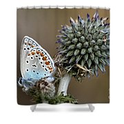 butterfly on a Echinops adenocaulon Shower Curtain