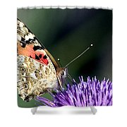 butterfly on a Silybum marianum I Shower Curtain