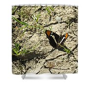 Butterfly On Cracked Ground Shower Curtain