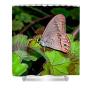 Butterfly On Geranium Leaf Shower Curtain