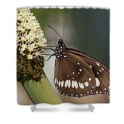 Butterfly On Grass Tree Flowers Shower Curtain