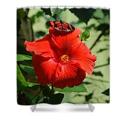 Butterfly On Hibiscus Shower Curtain