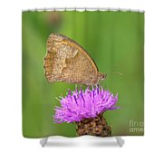 Butterfly On Knapweed Shower Curtain